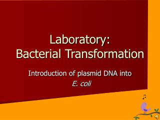 Laboratory: Bacterial Transformation