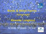 Birds  Wind Farms -  flying high