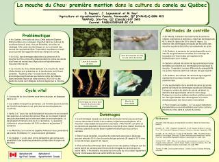 La mouche du Chou: premi re mention dans la culture du canola au Qu bec