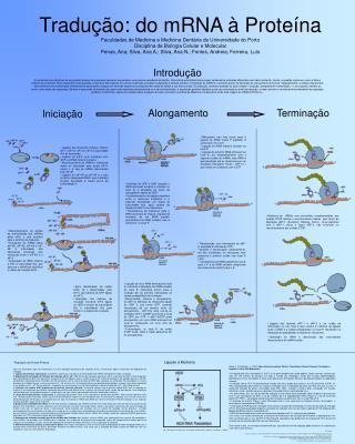 Tradu  o: do mRNA   Prote na Faculdades de Medicina e Medicina Dent ria da Universidade do Porto  Disciplina de Biologia