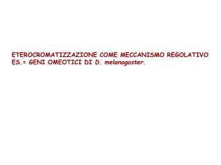 ETEROCROMATIZZAZIONE COME MECCANISMO REGOLATIVO ES. GENI OMEOTICI DI D. melanogaster.