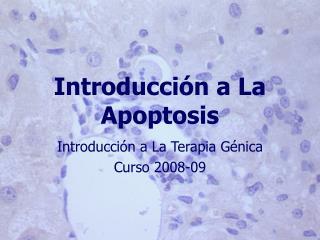 Introducci n a La Apoptosis