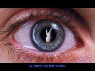EL PROYECTO MATRIZ 135