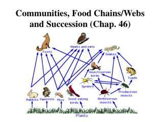 Communities, Food Chains