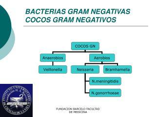 BACTERIAS GRAM NEGATIVAS COCOS GRAM NEGATIVOS