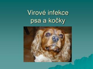 Virov  infekce psa a kocky