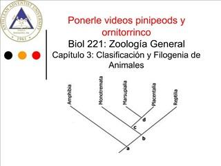Ponerle videos pinipeods y ornitorrinco Biol 221: Zoolog a General Cap tulo 3: Clasificaci n y Filogenia de Animales  Pr