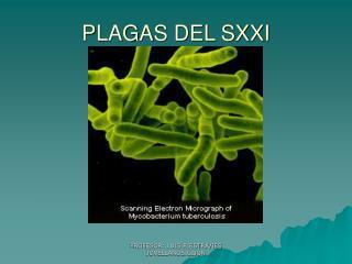 PLAGAS DEL SXXI