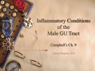 Inflammatory Conditions  of the  Male GU Tract  Campbell s Ch. 9