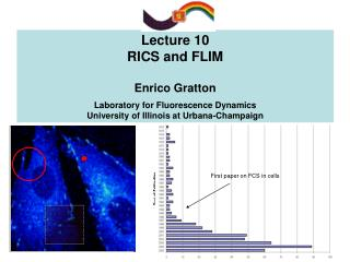Lecture 10  RICS and FLIM   Enrico Gratton  Laboratory for Fluorescence Dynamics University of Illinois at Urbana-Champa