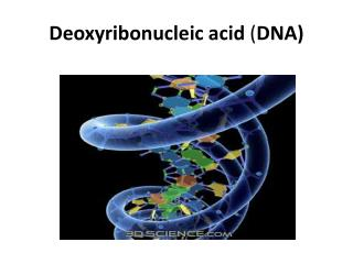 Deoxyribonucleic acid DNA