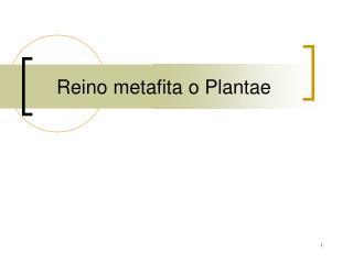 Reino metafita o Plantae