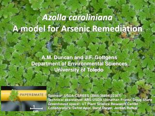 Azolla caroliniana A model for Arsenic Remediation