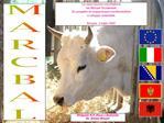La razza bovina marchigiana  nei Balcani Occidentali.  Un progetto di cooperazione transfrontaliera  e sviluppo sostenib