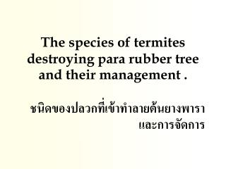 The species of termites destroying para rubber tree and their management .
