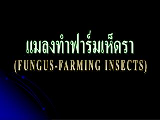 FUNGUS-FARMING INSECTS