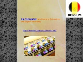 THE TYLER GROUP?Marihuana in Colorado en Washington uitverko