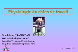 Physiologie du chien de travail
