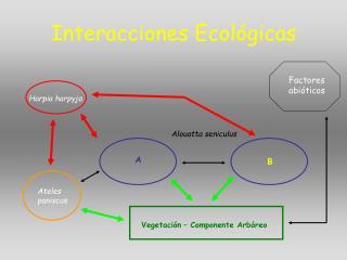 Interacciones Ecol gicas