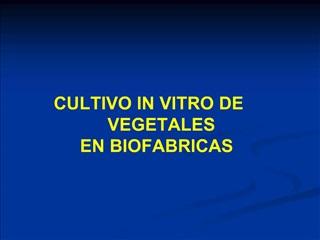 CULTIVO IN VITRO DE VEGETALES EN BIOFABRICAS