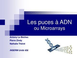 Les puces   ADN ou Microarrays