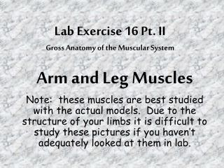 Lab Exercise 16 Pt. II Gross Anatomy of the Muscular System