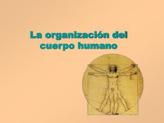 La organizaci n del cuerpo humano