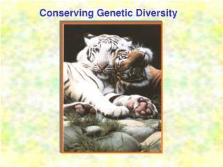 Conserving Genetic Diversity