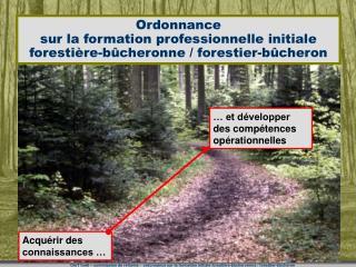 Ordonnance  sur la formation professionnelle initiale  foresti re-b cheronne