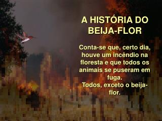 A HIST RIA DO BEIJA-FLOR  Conta-se que, certo dia, houve um inc ndio na floresta e que todos os animais se puseram em fu