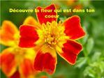 D couvre la fleur qui est dans ton coeur