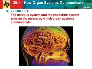KEY CONCEPT  The endocrine system produces hormones that affect growth, development, and homeostasis.