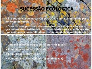SUCESS O ECOL GICA