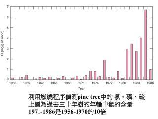 Pine tree   1971-19861956-197010