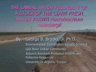 THE LARVAL HATCH FECUNDITY OF A STOCK OF THE GIANT FRESH WATER PRAWN Macrobrachium rosenbergii