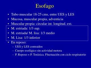 Esofago