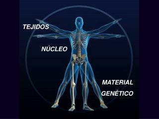 TEJIDOS              N CLEO                                  MATERIAL  GEN TICO