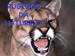 RUGIDOS DA NATUREZA