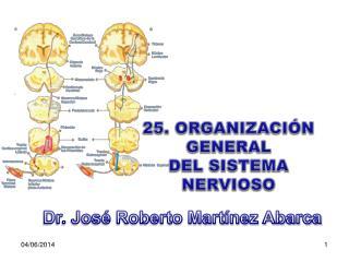 25. ORGANIZACI N GENERAL DEL SISTEMA NERVIOSO