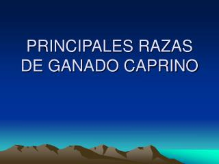PRINCIPALES RAZAS DE GANADO CAPRINO