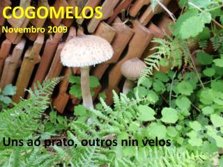 cogomelos 2