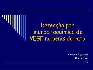 Detec  o por imunocitoqu mica de VEGF no p nis do rato
