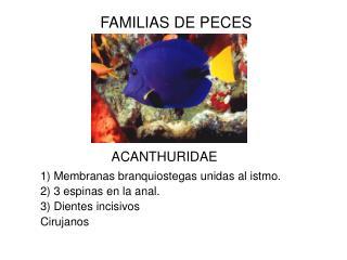 FAMILIAS DE PECES