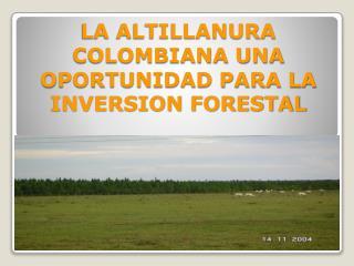 LA ALTILLANURA COLOMBIANA UNA OPORTUNIDAD PARA LA INVERSION FORESTAL