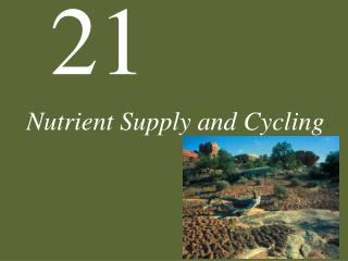 Nutrient Supply and Cycling
