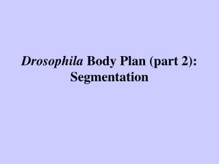 Drosophila Body Plan part 2: Segmentation