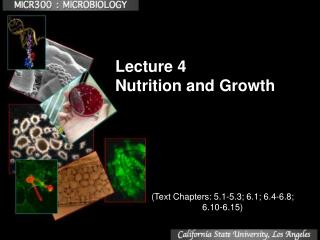 Lecture 4 Nutrition and Growth
