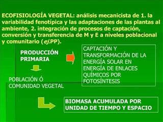 ECOFISIOLOG A VEGETAL: an lisis mecanicista de 1. la variabilidad fenot pica y las adaptaciones de las plantas al ambien