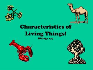 Characteristics of  Living Things Biology 137