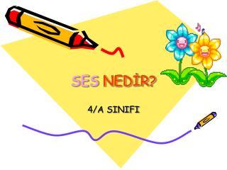 SES NEDIR